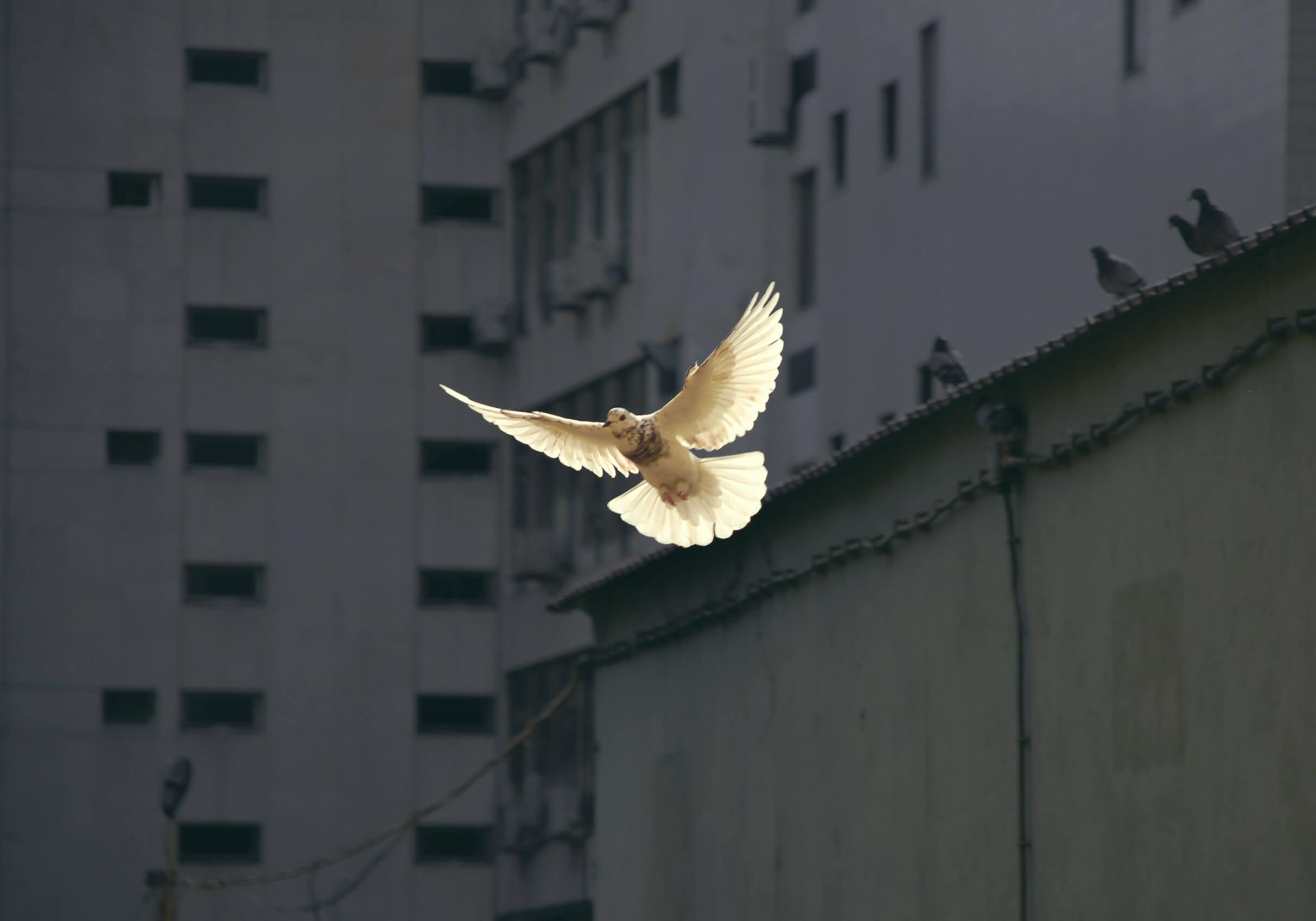 De witte duif onder de zwarte zwanen